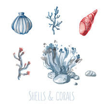 Watercolor Set Of Shells And Corals