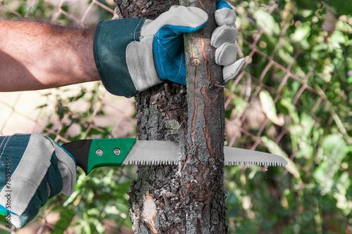 Fotografie, Obraz  Pruning tree