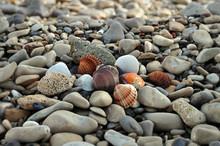 Seashells On Rocky Beach