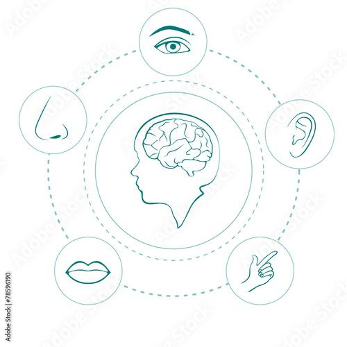 Foto  Vektor fünf Sinne Symbole, menschliche Nase, Ohr, Auge