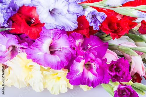 Staande foto Roze Gladiolus flower