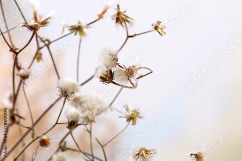 suszone-kwiaty-na-jasnym-tle