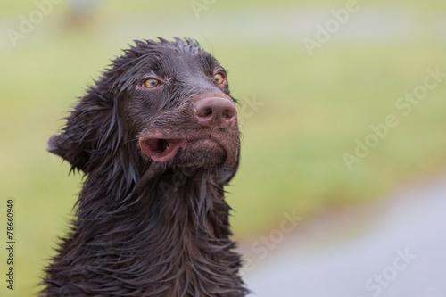 Fotografia, Obraz Verrückter Hund