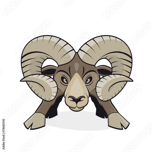 Fotografia  widder steinbock mufflon