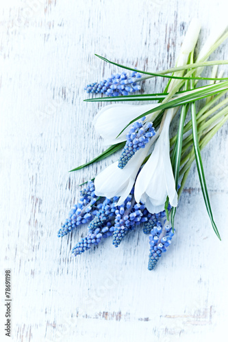 Wall Murals Lily of the valley Blue grape hyacinths and white crocus flowers