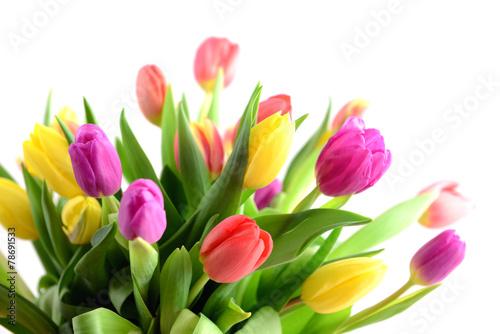 Fototapety, obrazy: Bunch of tulips on white background
