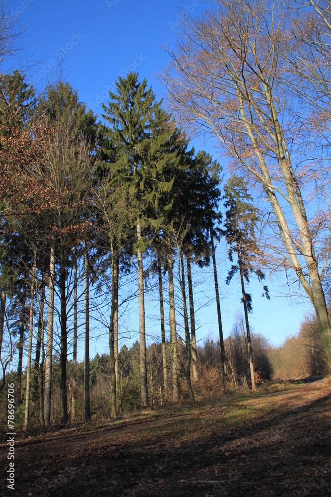 Fototapeta Wanderweg im Wald - obraz na płótnie