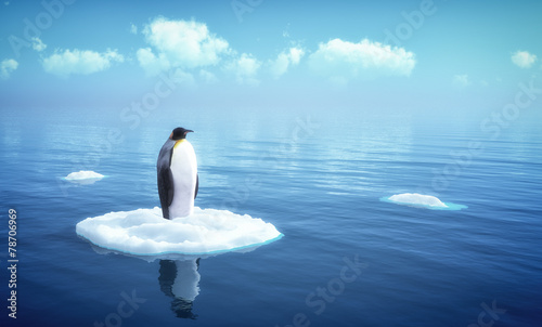 single penguin on a piece of ice Wallpaper Mural