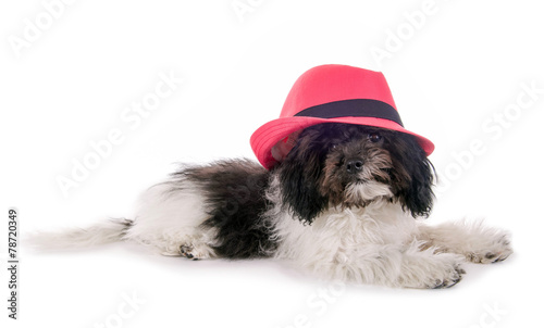 Kleiner Hund Mit Rosa Hut Buy This Stock Photo And Explore Similar