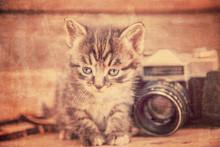 Kitten With Vintage Photo Camera, Vintage Image