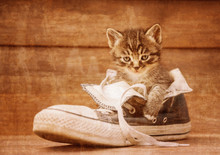 Kitten Sitting In A Shoe, Vint...