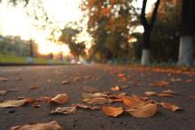 Yellow Leaves On An Asphalt Blurred Urban Background Autumn