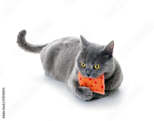 Katze mit Schmusekissen
