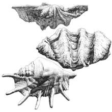 Illustration With Different Realistic Seashells