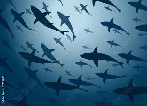 Fototapeta Shark school