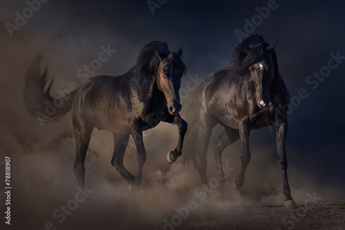 Fototapeta Two black stallion run in desert dust against sunset sky obraz