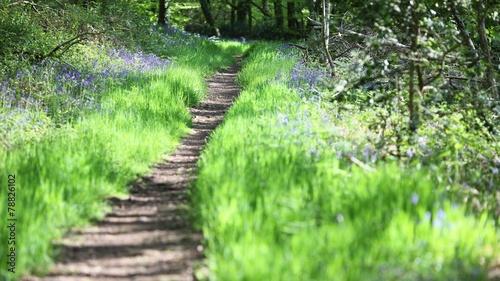 Foto op Canvas Weg in bos chemin de promenade