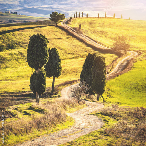 In de dag Zwavel geel Cypress trees on the road to a farmhouse in the Tuscan landscape