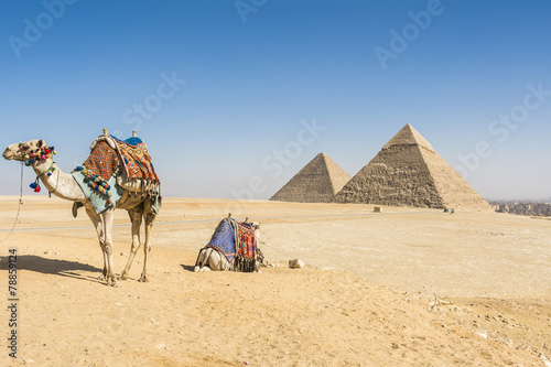 Poster Chameau General view of Pyramids of Giza, Egypt
