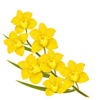 Holiday Yellow Flowers Backgro...