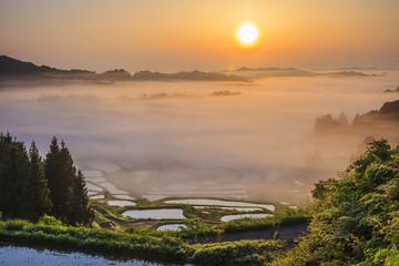 Fototapeta Sea of clouds and rice terraces, Hoshitouge, Niigata