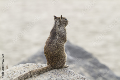Coastal Squirrel Poster