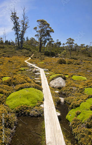 Foto op Canvas Australië Track in Walls of Jerusalem - Tasmania (Australia)
