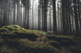 Fototapeta Las - wilderness landscape forest with pine trees and moss on rocks