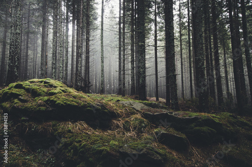 Aluminium Prints Gray traffic wilderness landscape forest with pine trees and moss on rocks