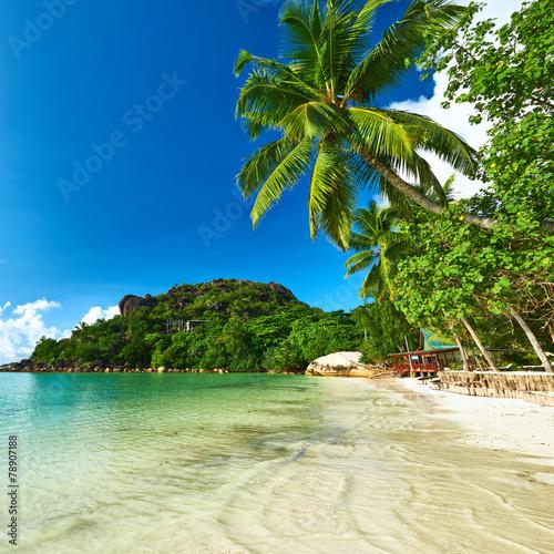 piekna-plaza-z-drzewkiem-palmowym-przy-seychelles