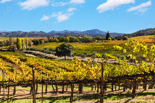 Photo  California wine country landscape
