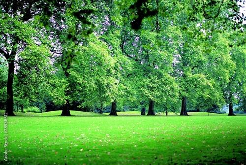 Papiers peints Vert 여름 공원풍경