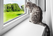 Cat Sits On A Windowsill And L...