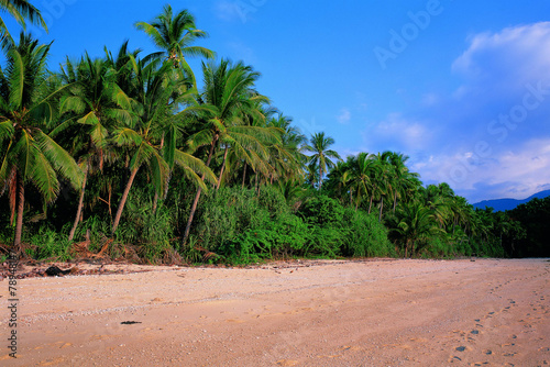 Foto op Canvas Tropical strand 해변과 야자수