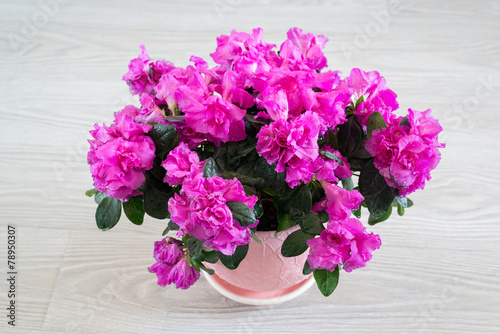 In de dag Azalea Pink azalea and rose stand on the floor in room