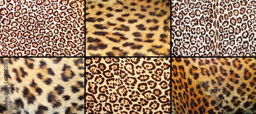 Staande foto Kunstmatig collection of leopard pelt textures