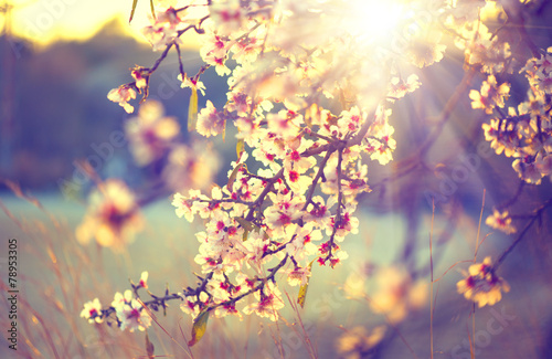 Poster Lente Beautiful nature scene with blooming tree and sun flare