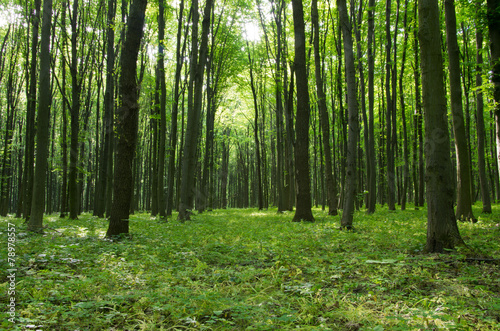 forest #78978557