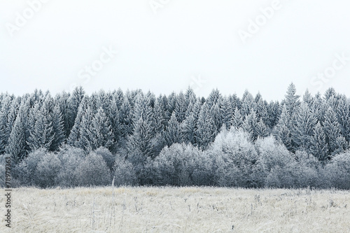 Poster Grijs white wood covered with frost frosty landscape