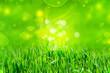 Leinwandbild Motiv green grass