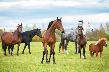 Herd of horses standing on the pasture in summer