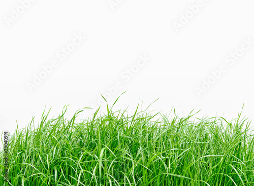 Deurstickers Gras Green grass isolated on white background