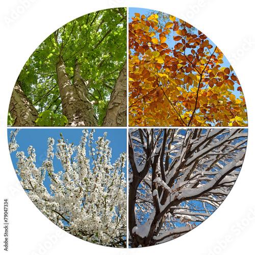 Foto op Plexiglas Magnolia 4 Jahreszeiten