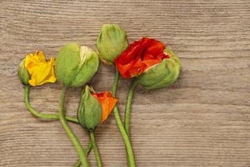 Poppy flowers on wooden background