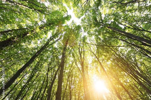 Fotografie, Obraz  Forest