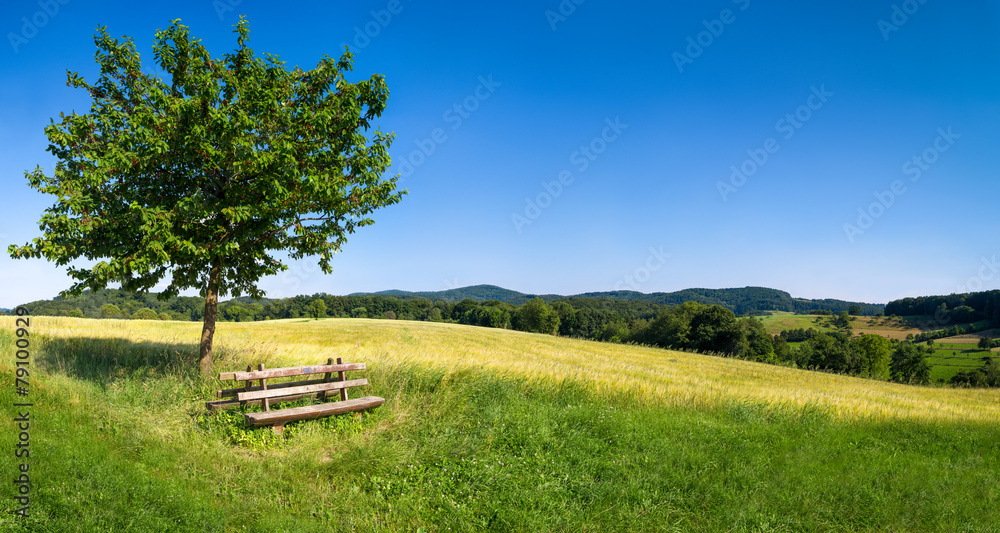 Fototapeta Grüne Landschaft mit blauem Himmel und Parkbank