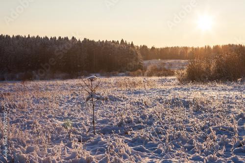 Fotografie, Obraz  Sunny winter nature landscape