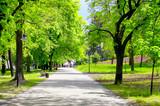Zielony miejski park