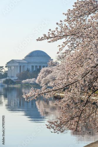 Photo sur Toile Lieux connus d Amérique Washington DC - Thomas Jefferson Memorial in Spring
