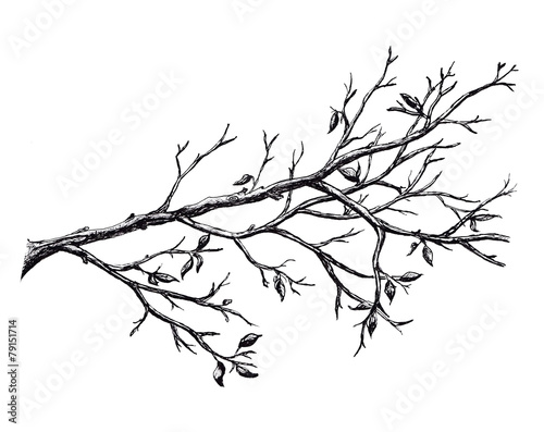 Fotomural Ink hand drawn branch